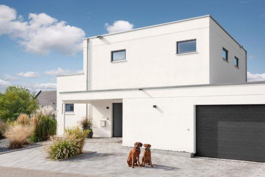 Haus Groh - Ein Hund sitzt vor einem Gebäude - Bauhaus